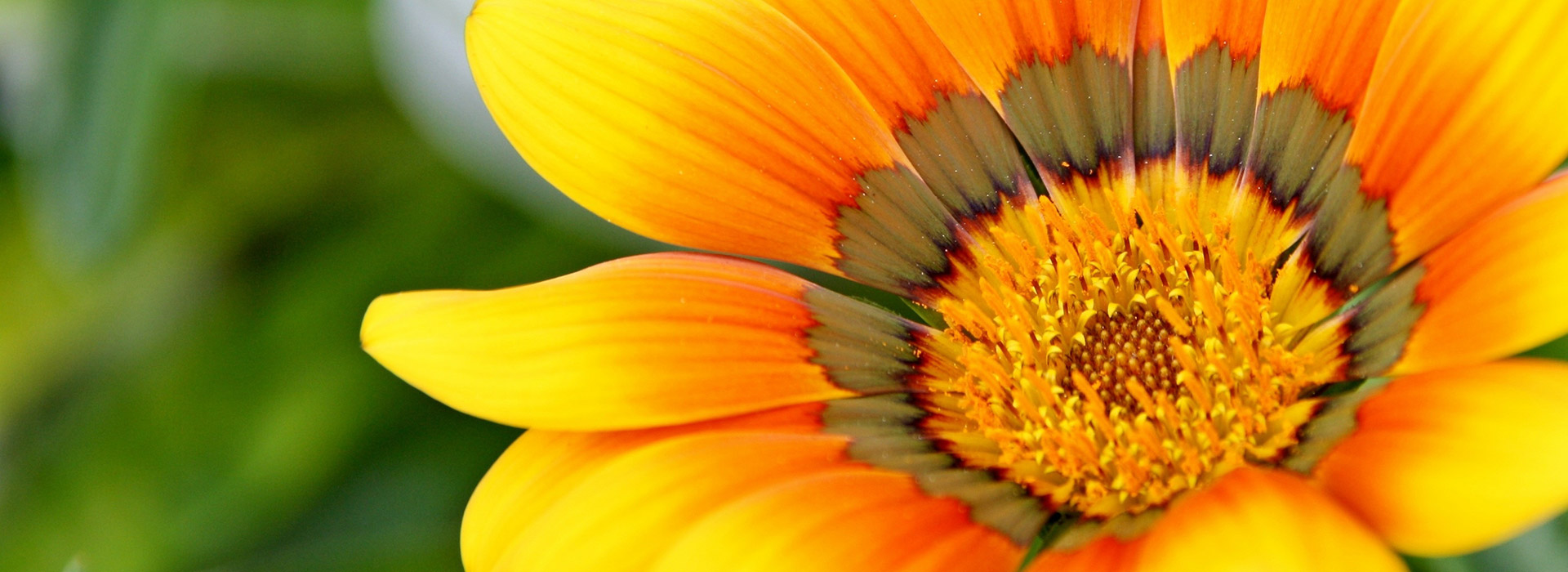 fleur jaune orangée